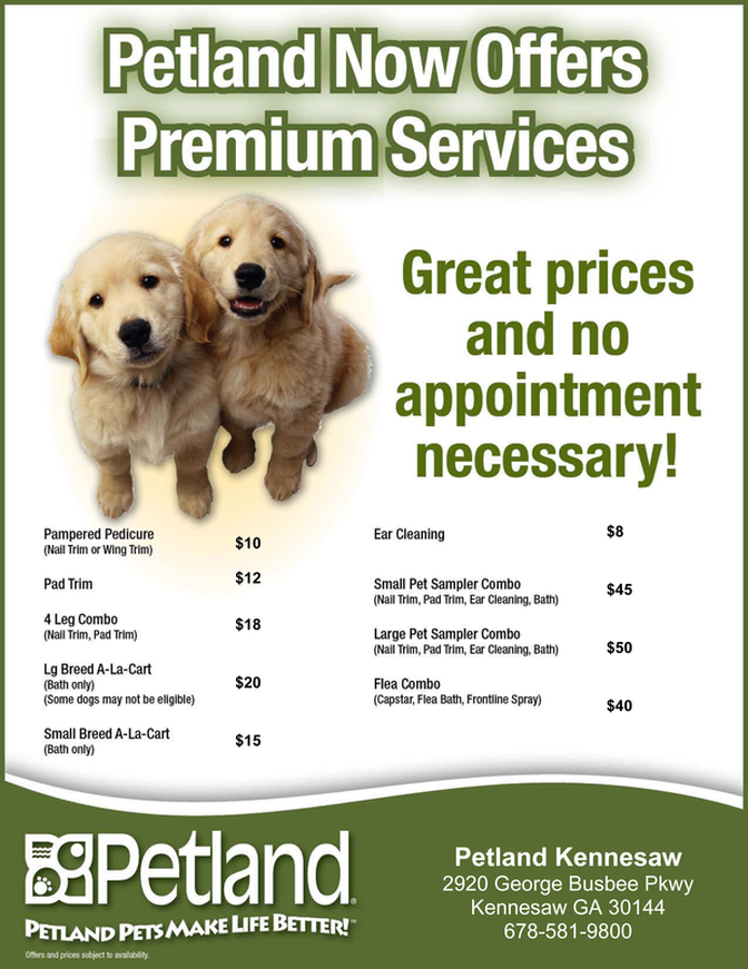 dog grooming in kennesaw