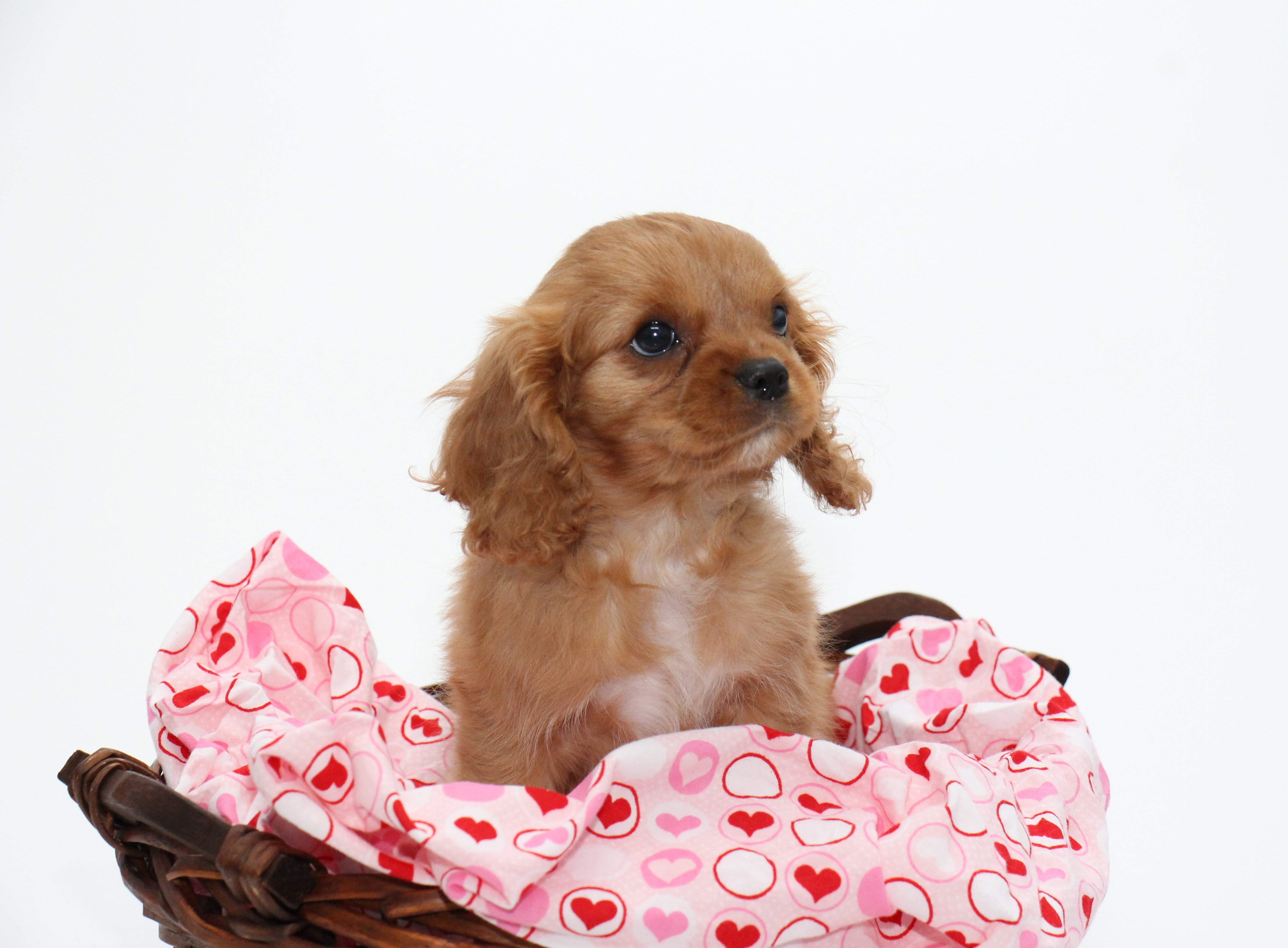 Kid Friendly Small Dog Breeds That Don
