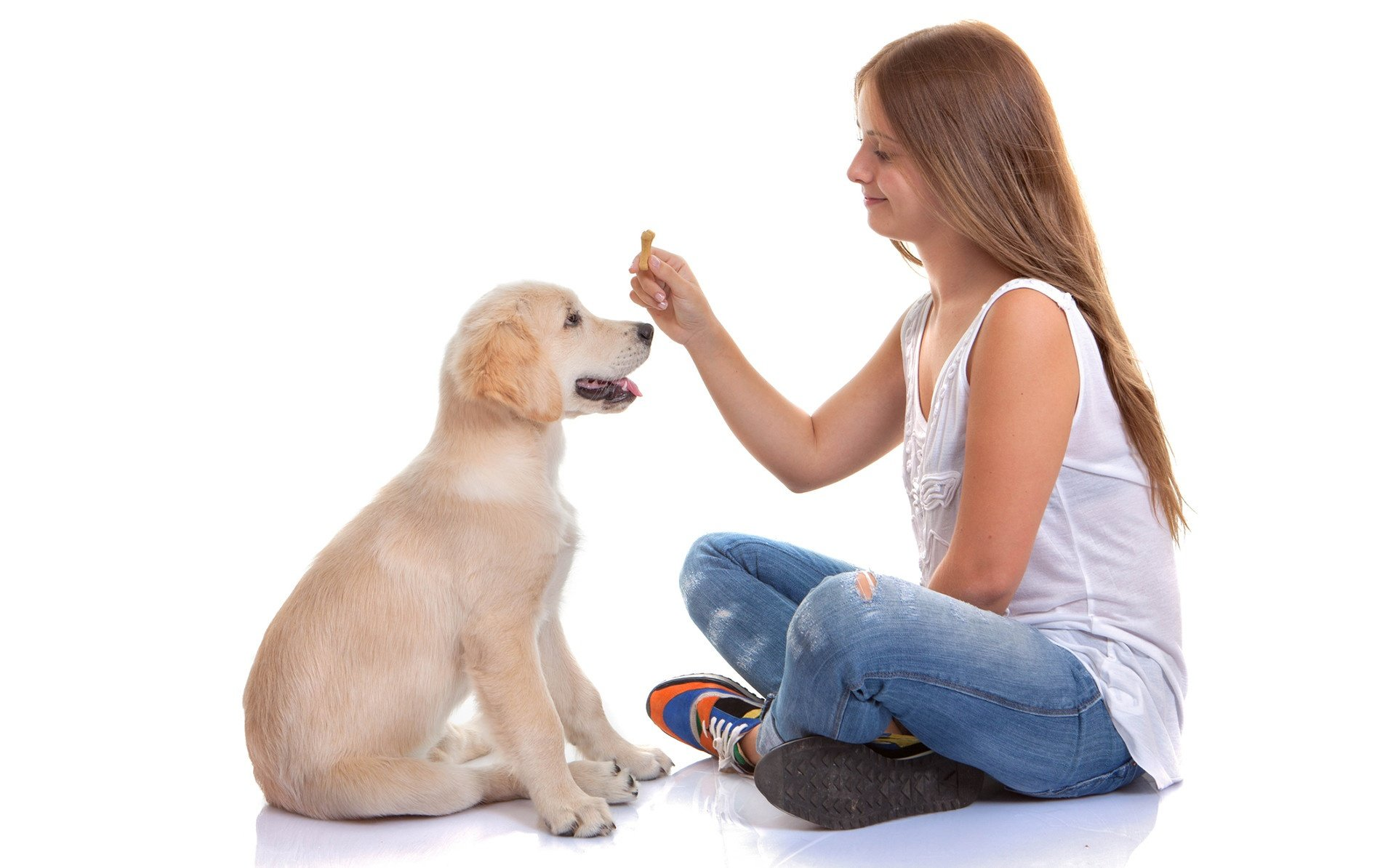 Dog Training The First Steps For Any New Owner
