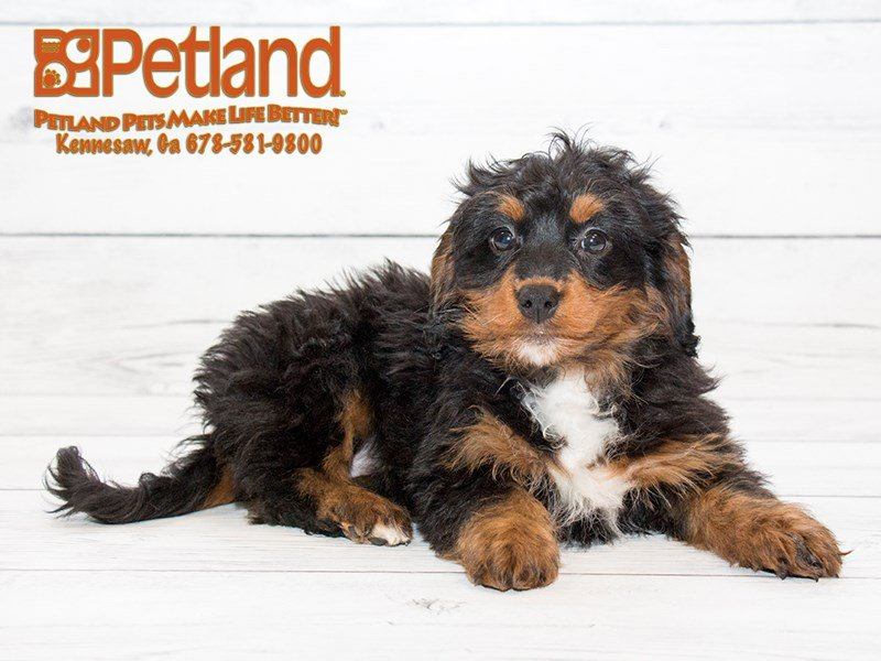 Pet Pride Dog Food Coupons