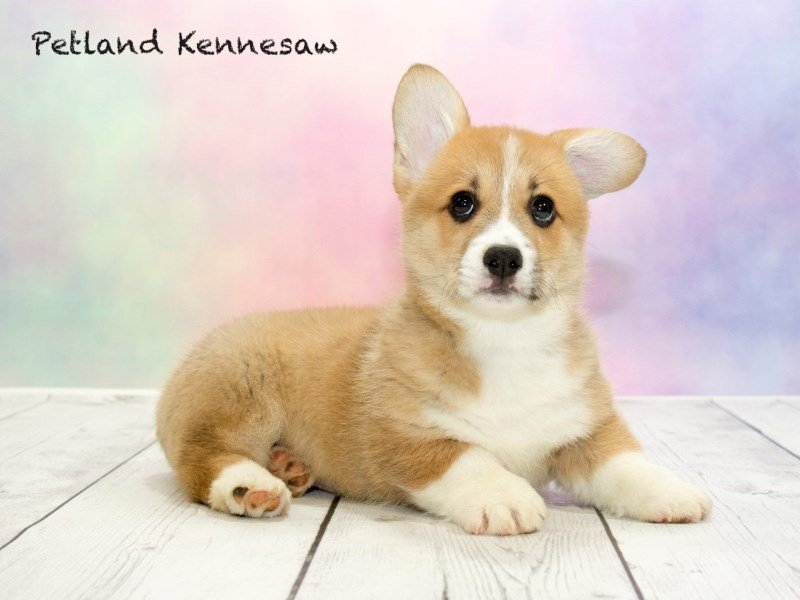 Petland Kennesaw Puppies Blog