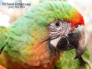 Parrots are Pets Too…And We've Got 'Em - Petland Kennesaw