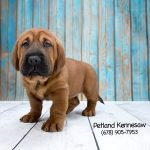 walrus puppies for sale