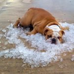 Keeping Your Dog Cool in The Summer