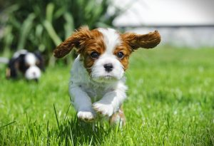 new puppy, 5 Must-Haves for Life With a New Puppy
