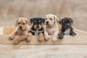 Puppy, Five Tips For a Healthy & Happy Puppy Smile