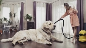 clean, Tips for Maintaining a Clean Home with Pets