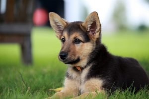 doggy daycare, Preparing Your Puppy for Doggy Daycare