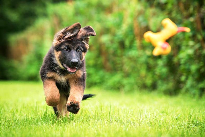 4 Fun Backyard Games for Your Dog this Summer