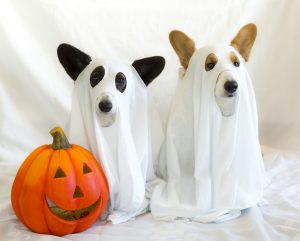 Halloween, Trick or Treat- Fun Halloween Pet Projects 👻