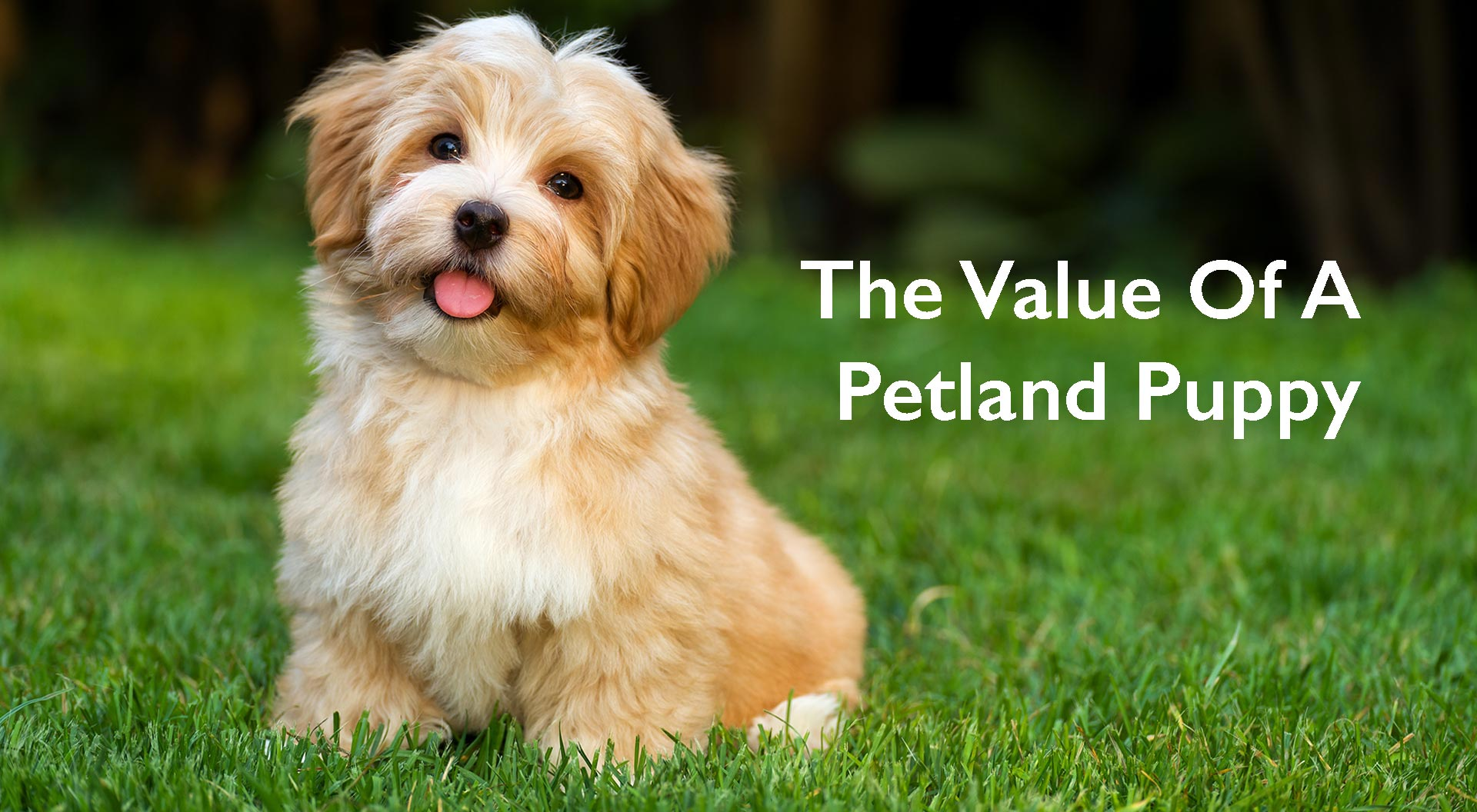 Petland Kennesaw / Atlanta Value of a Petland Puppy