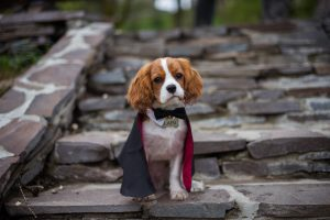 costumes, It's Time For Halloween Dog Costumes