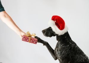 Operation Santa Paws, Operation Santa Paws & How You can Help