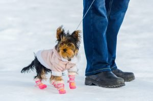 Paws, Snow Matter What, Protect Your Pup's Paws