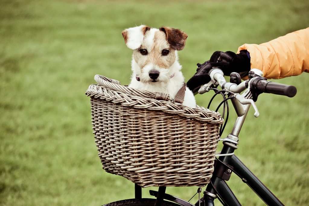 Biking, Safety Tips For Biking With Your Pooch