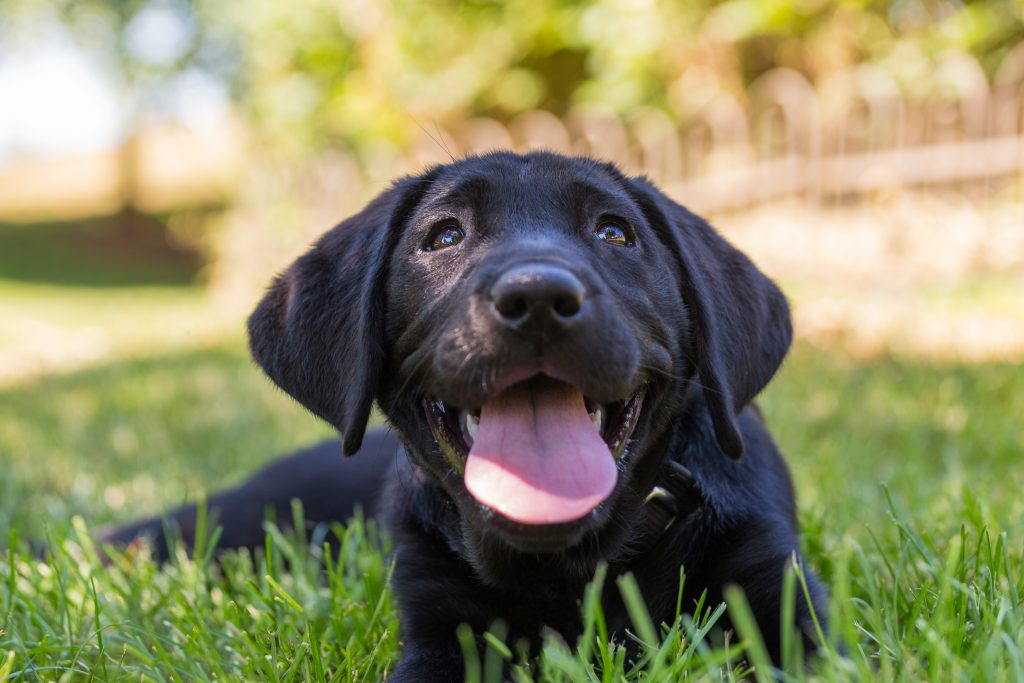 Earth Day, Earth Day – Tips On Being Environmentally Friendly Pet Parents