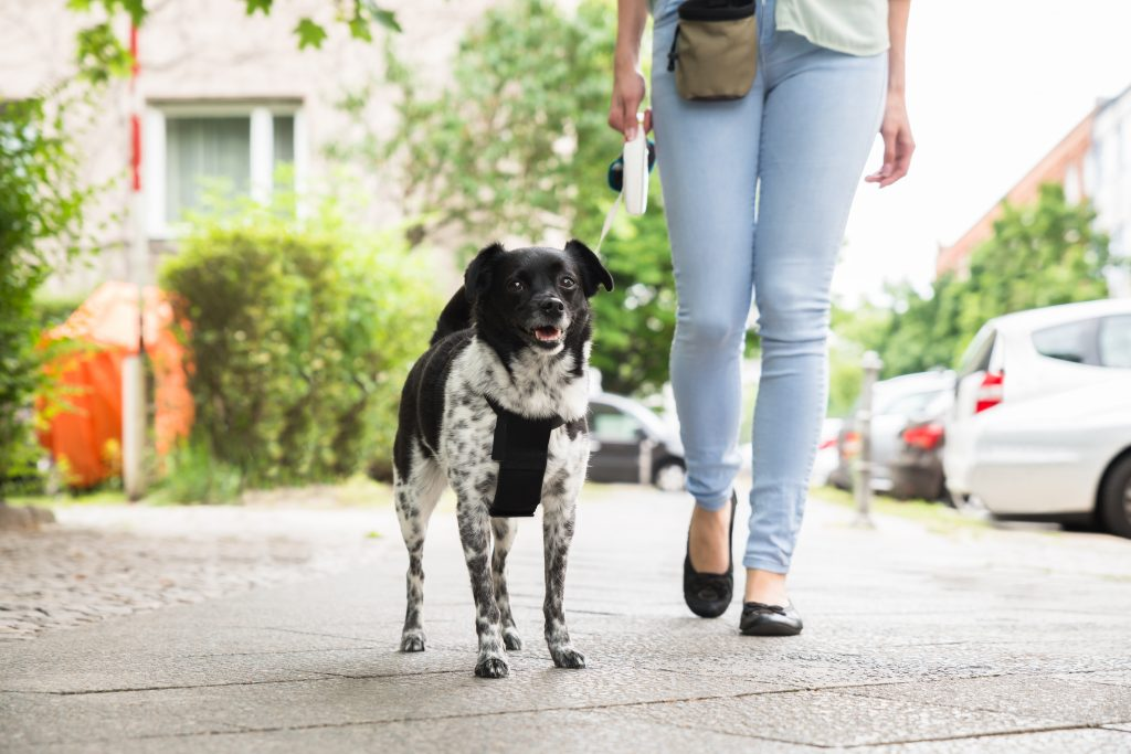 Leashes, Retractable Leashes – Yay or Nay?