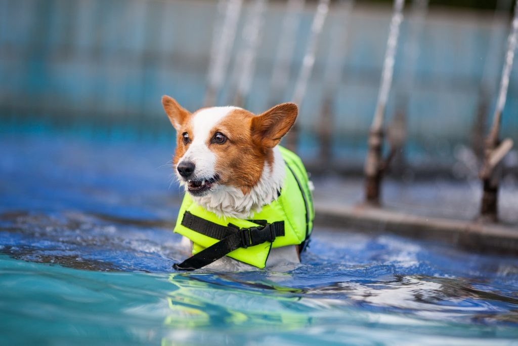 swimming, 10 Ways to Make Swimming Safer With Your Canine