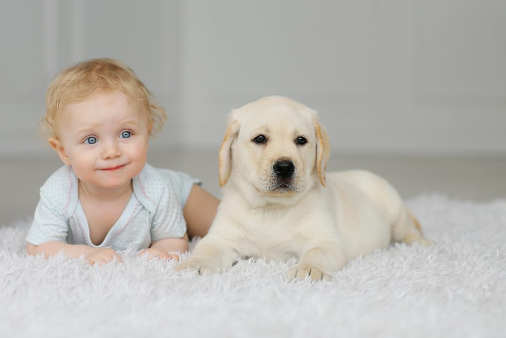 Newborns, Dogs and Newborns: This Is How to Introduce a Dog to Your Baby