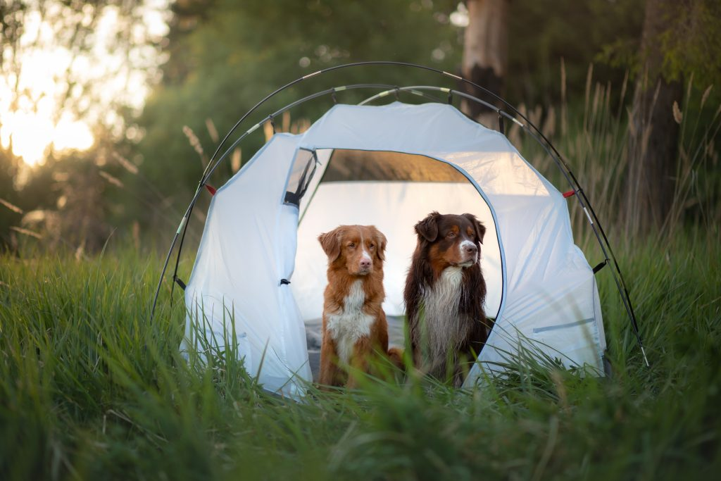 Summer, 5 Fun Things to Do With Your Dog This Summer