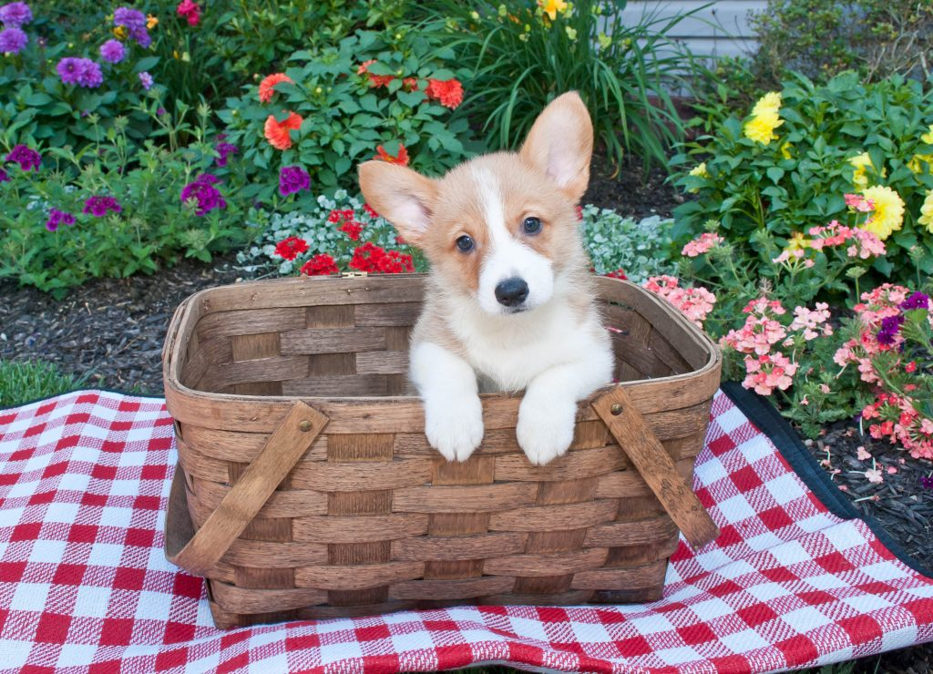 Picnic, National Picnic Month: Planning the Paw-Fect Dog-Friendly Picnic