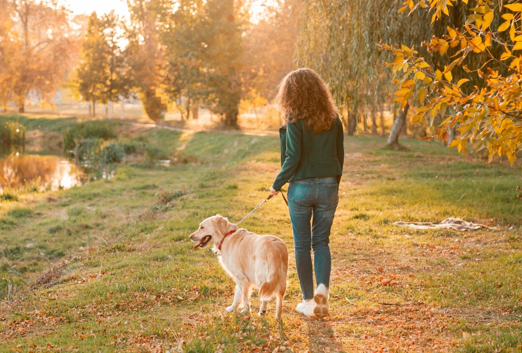 Autumn, Must-Know Autumn Safety Tips for Pet Parents