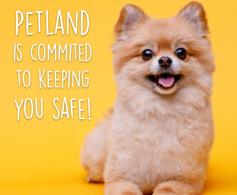Holiday, How Petland is Staying Safe during the Holiday Season