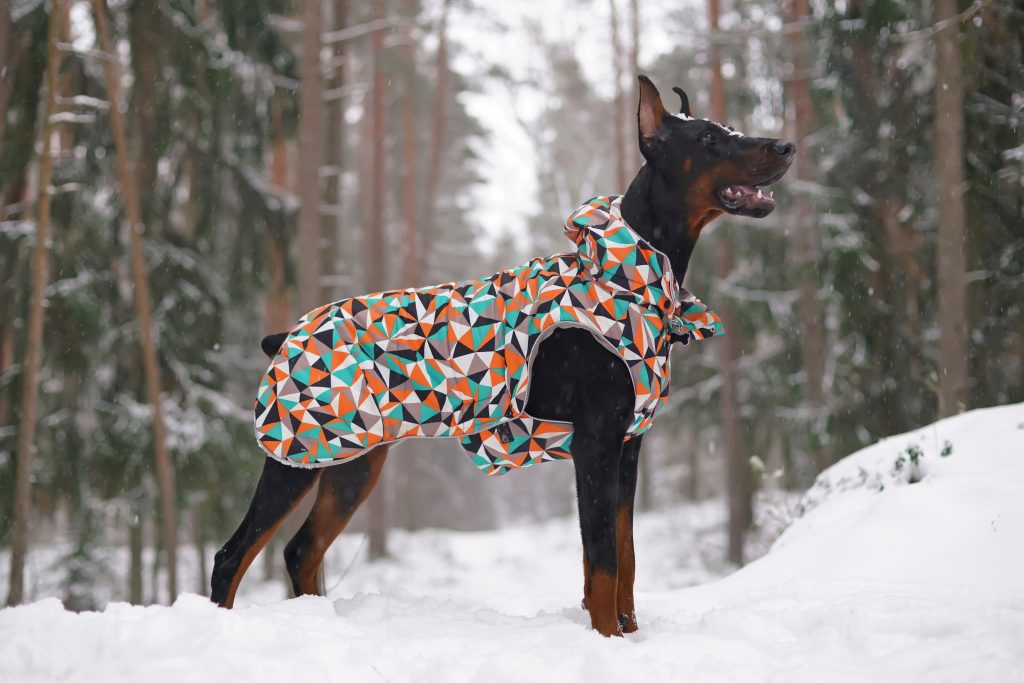 winter, The Best Winter Coats/Sweaters For Large Dogs (And A Couple For New Puppies Too!)