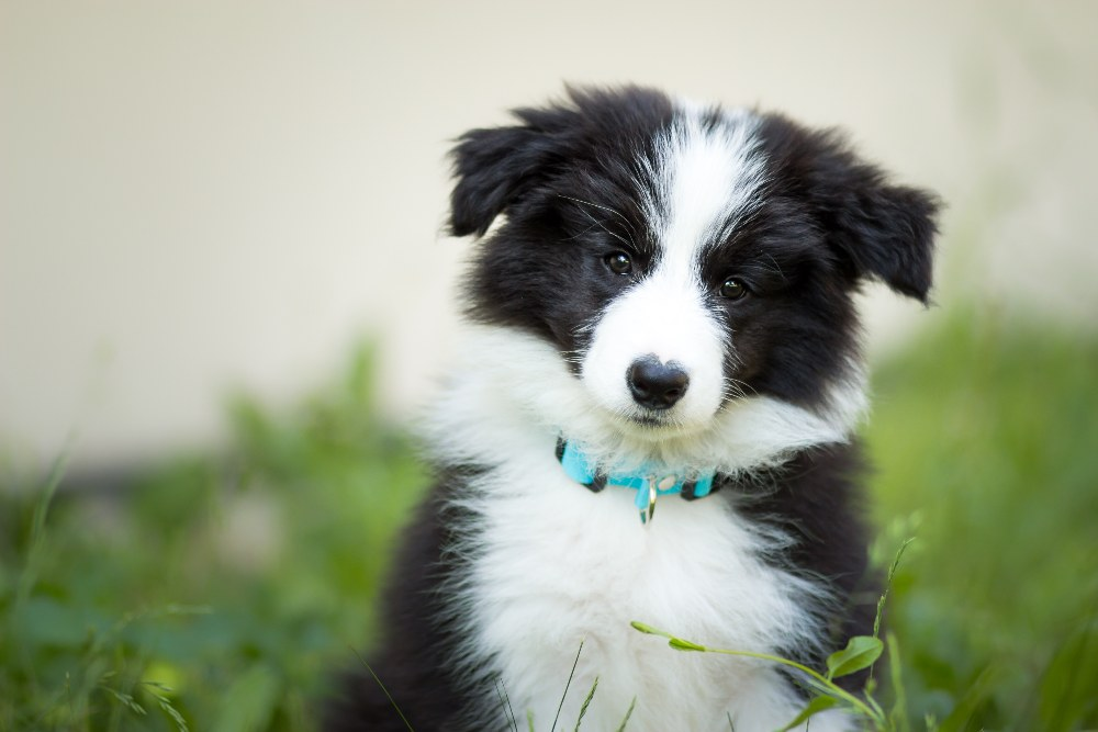 Pet Insurance, Pet Insurance: Everything You Need to Know